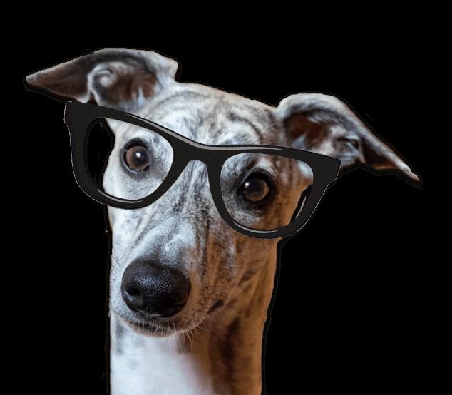 Unser Bürohund Finn